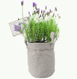Kruiden in Jute - Lavendel