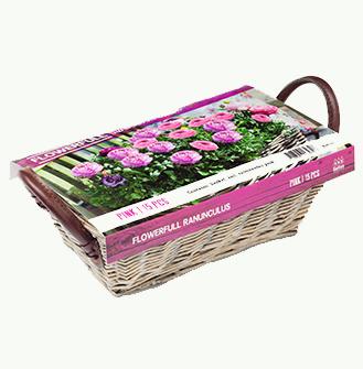 Flowerfull Ranonkels, roze