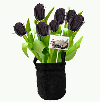 Zwarte Tulpen in jute