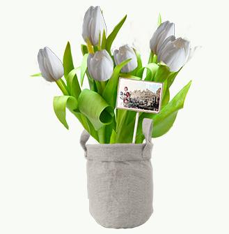 Witte Tulpen in jute