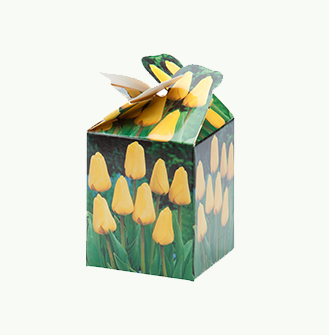 Me 2 You - Tulp Geel