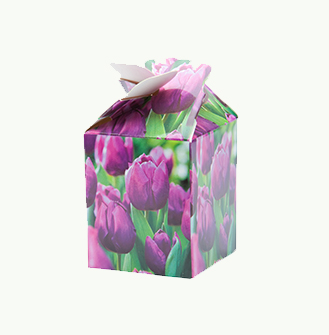 Me 2 You - Tulp Paars