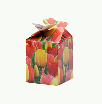 Me 2 You - Tulp Gemengd